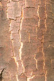 Brown bark texture with cracks Stock Photography
