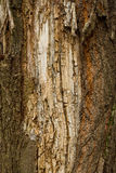Brown Bark Texture Stock Image