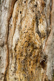Brown Bark Texture. Tree bark wood lichen texture closeup with cracks and orange brown color tones stock photo