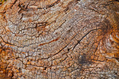 Brown Bark. Tree bark wood texture closeup with cracks and orange brown color tones royalty free illustration