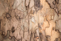 Brown bark Royalty Free Stock Photos
