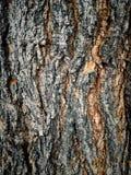 brown barkentyna stary drzewo fotografia royalty free