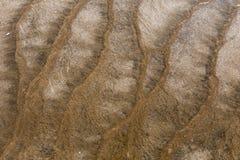 Brown Barwił bakterie Zdjęcia Stock