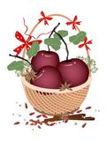 A Brown Basket of Christmas Apples and Spices Royalty Free Stock Image