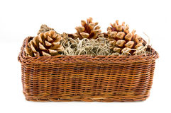 Brown basket with pine cones Stock Images
