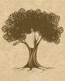 Brown-Baum Stockbilder