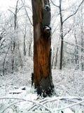 Brown-Baum im Winterschnee stockbild