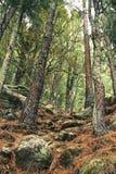 Brown-Baum-Wald Lizenzfreies Stockbild