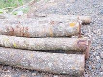 Brown-Baumast Trockener Zweig Tote Zweige Baumast von großem Stockfoto