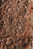 Brown-Baumrinde mit trockenem Gras lizenzfreie stockbilder
