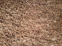 Brown-Baumrindebeschaffenheit Stockbild