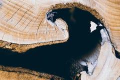 Brown-Baumstamm für Hintergrund Lizenzfreie Stockbilder