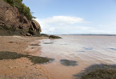 Brown Beach Royalty Free Stock Images