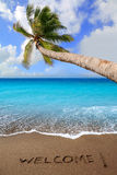 Brown beach sand with written word Welcome. And tropical palm tree greeting Stock Images