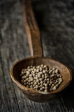 Brown Beans on a Brown Wooden Spoon Stock Image