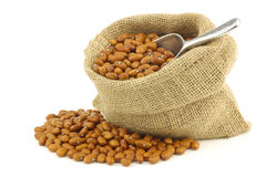 Brown beans in a burlap bag with an aluminum scoop Stock Photos