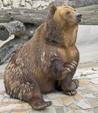 Brown bear 1 Royalty Free Stock Photography