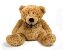 Free Brown Bear Royalty Free Stock Images - 13072399