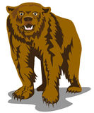 Brown bear. Vector art of a Brown bear on white background Royalty Free Stock Images