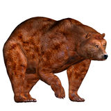 Brown Bear. Illustration of a Brown Bear on a white background Stock Photography