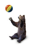 Brown bear with a ball isolated Royalty Free Stock Photos