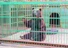 Brown bear behind bars in a cage Royalty Free Stock Photo