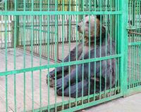 Brown bear behind bars in a cage Stock Photo