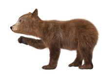 Brown Bear Cub. 3D digital render of a brown bear cub  on white background Royalty Free Stock Photography