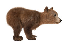 Brown Bear Cub. 3D digital render of a brown bear cub  on white background Stock Photos