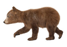 Brown Bear Cub. 3D digital render of a brown bear cub  on white background Stock Images