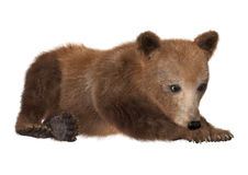 Brown Bear Cub. 3D digital render of a brown bear cub  on white background Royalty Free Stock Image