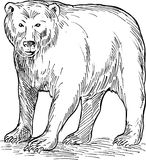 Brown bear drawing Stock Photos