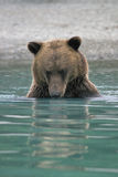 Brown Bear Fishing Stock Photography