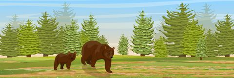 Brown bear and her cub go through the meadow stock illustration