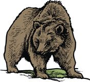 Brown bear isolated Royalty Free Stock Images