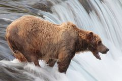 Brown bear, Katmai waterfall, Alaska Royalty Free Stock Photos