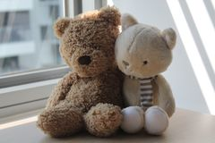 Brown Bear and kitten toy sitting by the window in shadows Stock Photos