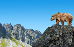 Brown bear in mountain landscape. Stock Photo
