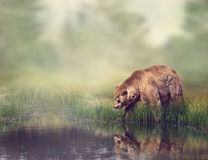 Brown Bear Near the Pond Stock Image