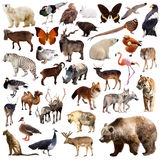 Brown bear and other asian animals. Isolated on white. Background stock photo