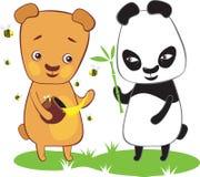 Brown bear and panda. Brown bear eating honey and panda with bamboo Royalty Free Stock Image