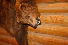 Brown bear pelt Stock Photo