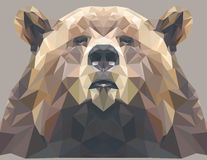 Brown bear portrait. Abstract low poly design. Vector illustration. Stock Photo