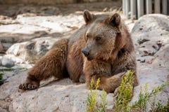 Brown bear on the rocks. Stock Photo
