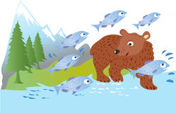 Brown bear and salmon. A brown bear fishing for salmon in a river Royalty Free Stock Photos