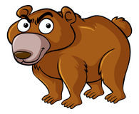 Brown bear with serious face Royalty Free Stock Photos