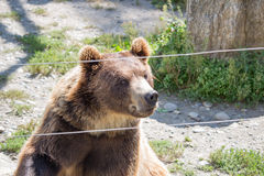 The brown bear sits in the zoo Stock Photo