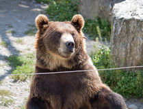The brown bear sits in the zoo Stock Photos