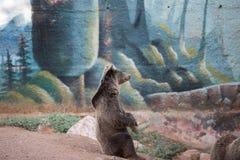 A brown bear sitting stock photo