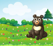 A brown bear sitting in the garden Stock Image